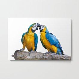 isolated ara ararauna parrot Metal Print