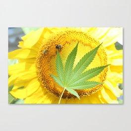 Sunflower Sativa Canvas Print