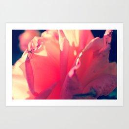Winter Rose  Art Print