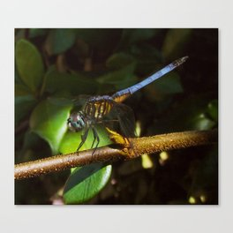 The neon blue dragonfly Canvas Print