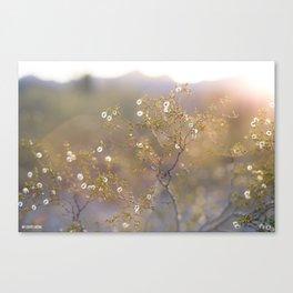 Creosote Stars  Canvas Print