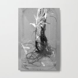 floating roots in bottle ed. 2 Metal Print