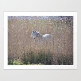 Shy horse. Art Print