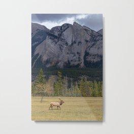 Jasper Valley Elk Metal Print