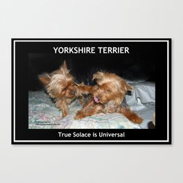 Yorkie - True Solace is Universal Canvas Print