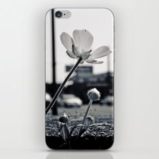 Roadside beauty iPhone & iPod Skin