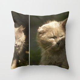 Gray cat walks on a green grass Throw Pillow