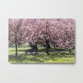 Under A Cherry Blossom Tree Metal Print