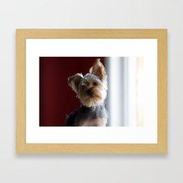 A Dog Named Dante Framed Art Print