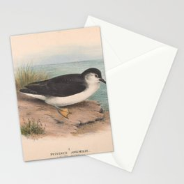 006 Allied Petrel puffinus assimilis4 Stationery Cards