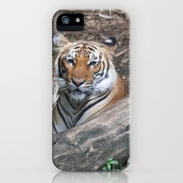 Tiger Relaxing iPhone Case