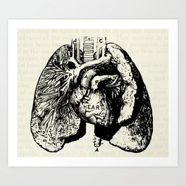 Vintage Anatomy Illustration of the Heart and Lungs Art Print