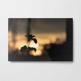 Leaf and sunset Metal Print