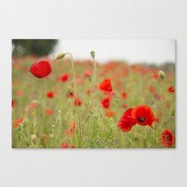 Poppy  Requiem  Canvas Print