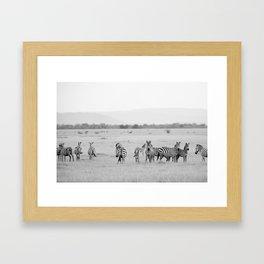 Zebras on The Serengeti Framed Art Print