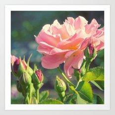 painted rose bokeh Art Print