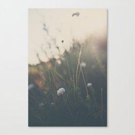 buckwheat ... Canvas Print