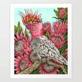 Major Mitchells Cockatoo Art Print