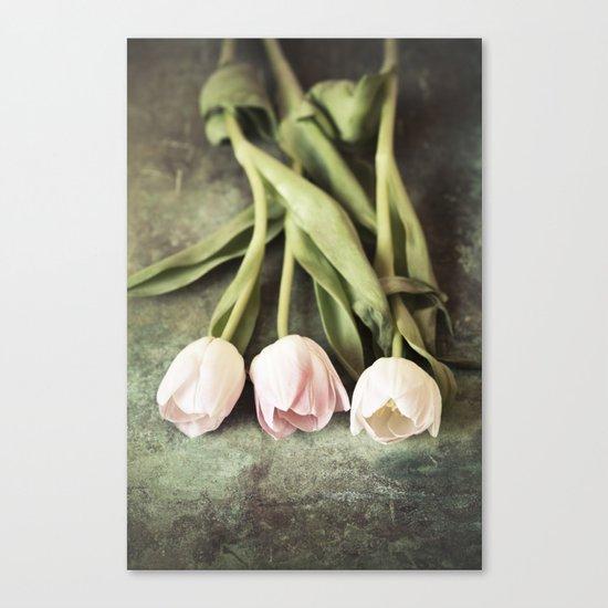 Three Vintage Tulips Canvas Print