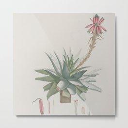 Vintage succulent aloe cactus agave antique botanical desert print boho tribal chic Metal Print