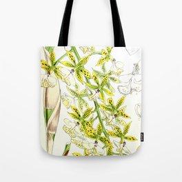 A orchid plant - Vintage illustration Tote Bag