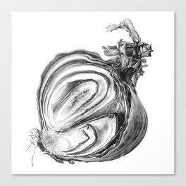 Withered Onion Canvas Print