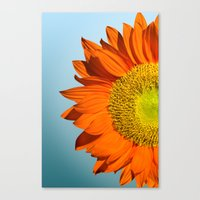 sunflowers Canvas Prints featuring sunflowers by mark ashkenazi