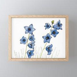Campanula Little Bell Flower, bright blue floral print Framed Mini Art Print