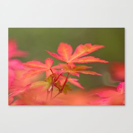 Japanese things 2 61 Canvas Print