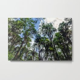 Swamp Trees with Moss Metal Print