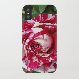 A Red and White Rose iPhone Case