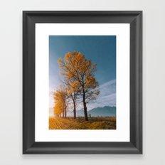 Golden trees Framed Art Print