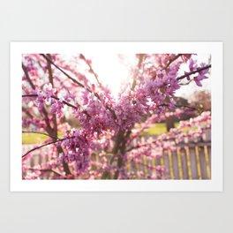 Blossoms Pt. 2 Art Print