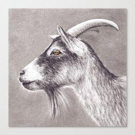 Little goat Canvas Print