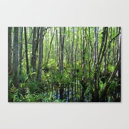 When the Cypress Whispers Canvas Print