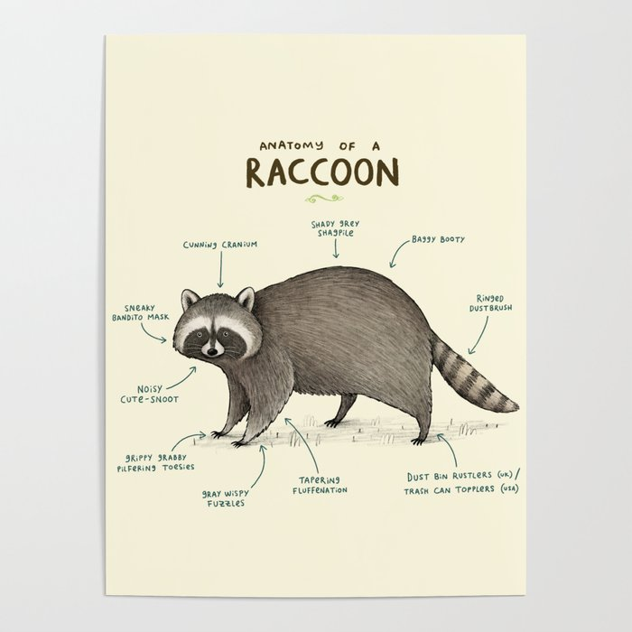 Anatomy Of A Raccoon Poster By Sophiecorrigan Society6