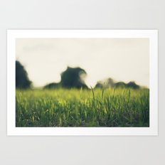 Summer eve grass Art Print