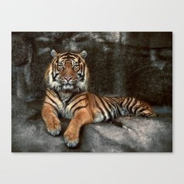 in the eyes of the tiger Canvas Print