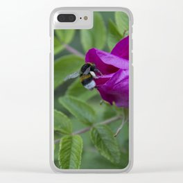 Bumble Bee On Wild Rose Clear iPhone Case