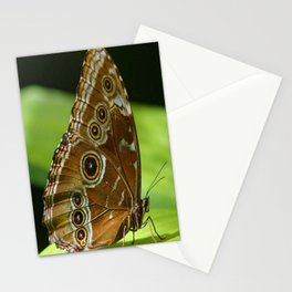 Beautiful Butterfly Wings of Meadow Brown Stationery Cards