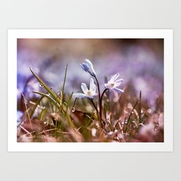 spring is just around the corner  Art Print
