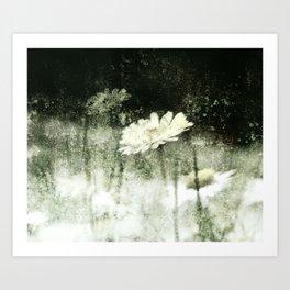 Daisy Love b&w, photography 2009 Art Print