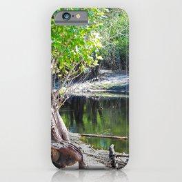 Hollow Tree Stump in Swamp iPhone Case