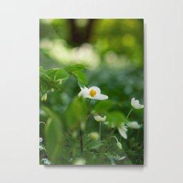 Delicate Wood Anemone Flower Metal Print