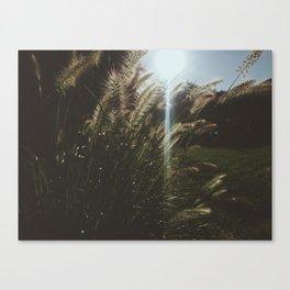 A Breeze Canvas Print