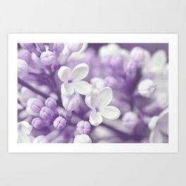 Lilac 167 Art Print