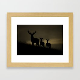 Red Deer at dawn Framed Art Print