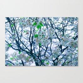 Cherry Blossom (Blue) Canvas Print