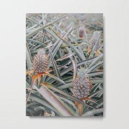 Maui Gold Pineapple Fields, Maui, Hawaii #6 Metal Print
