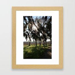 Long Shadows of the Cypress Framed Art Print